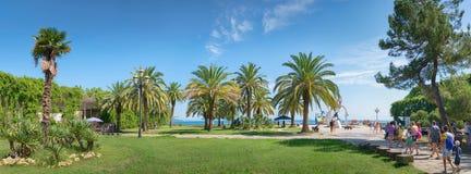 Landscape with palms. Pitsunda, Abkhazia Royalty Free Stock Images