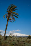Landscape for a palmtree and volcano Etna Royalty Free Stock Images
