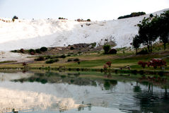 Landscape of Pamukkale, Turkey,. Landscape of Pamuk kale, Turkey Royalty Free Stock Image