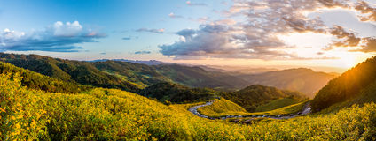 Landscape panorama of Tithonia diversifolia field and sunset on mountain Stock Photo