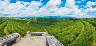 Landscape panorama view of tea plantation at at choui fong farm,Chiang Rai, Thailand is Top tourist destinations. Landmark of Chiang Rai royalty free stock images