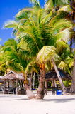Landscape of paradise tropical island with palms, cottages and white sand beach Royalty Free Stock Photos