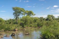 Landscape of Parana River at Iguazu Falls Stock Image
