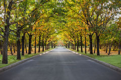 Landscape  park allee nature Royalty Free Stock Image
