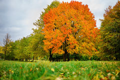 Landscape in the park with autumn trees Royalty Free Stock Photo