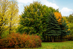 Landscape in the park with autumn trees Stock Photography