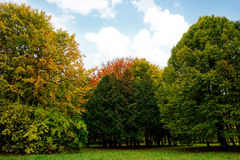 Landscape in the park with autumn trees Stock Photo