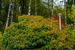 Landscape in the park with autumn trees Royalty Free Stock Images