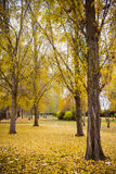Landscape Park in Autumn Royalty Free Stock Photos