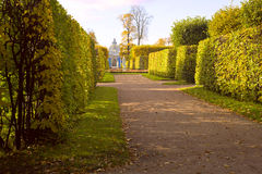 Alley and the Grotto in the park of the Catherine Palace. Landscape in park with the avenue and a green hedge Stock Images