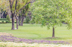 Landscape of the park. Royalty Free Stock Photos
