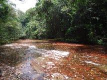 Parque Gran Sabana Bolivar Venezuela Paisaje. Parque Nacional Gran Sabana cascada de laja Roja Bolívar Venezuela royalty free stock photography