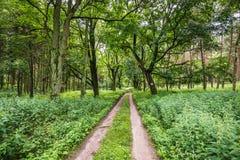 Landscape Park Near Cedynia Stock Photo