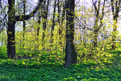 The landscape in the park. Royalty Free Stock Photography