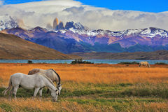 The landscape in the park Torres del Paine Royalty Free Stock Image