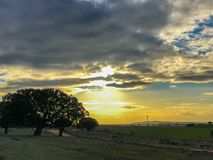 Landscape of the pasture at sunset with holm oak and blue sky and clouds in Spain. Landscape of the pasture at sunset with holm oak and blue sky and clouds Stock Image