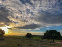 Landscape of the pasture at sunset with holm oak and blue sky and clouds in Spain. Landscape of the pasture at sunset with holm oak and blue sky and clouds Royalty Free Stock Images