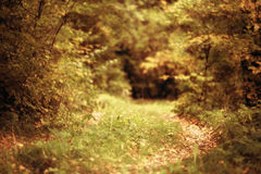 Landscape with a path in the autumn forest Royalty Free Stock Photography