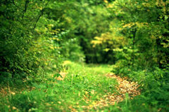 Landscape with a path in the autumn forest Royalty Free Stock Photo