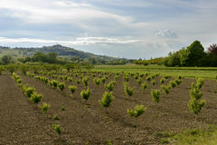 Landscape with peach trees in Curone valley, Italy Stock Photos