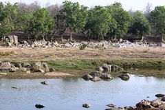Landscape of pench river at pench national park ,madhyapradesh ,india ,area of tiger resting in water stock photos