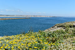 Landscape in Peniche, Portugal. Landscape in Peniche with flowers on the rocks, Portugal royalty free stock photo