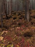 Moody Autumn Forest Located in the Hills. Red Grass. Foggy Morning. stock image