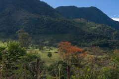 GREEN JUNGLE OF PERUVIAN RAIN FOREST stock images