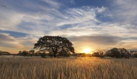 Landscape photo of a dead silhouette tree at sunset with blue sk Stock Image
