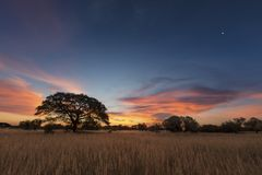 Landscape photo of a dead silhouette tree at sunset with blue sk Royalty Free Stock Image