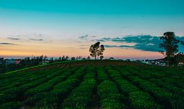 Landscape Photo of Field Royalty Free Stock Photo