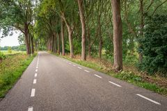 Long asphalt road with tall trees on both sides. Landscape photo of a long asphalt road with stripes on the sides of the road and high trees on both sides. It is stock image