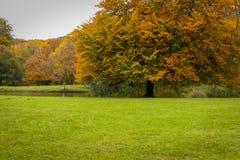Beauty of autumn landscapes. Landscape photo of a park in autumn season Stock Images