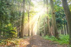Landscape Photo of Pathway Between Green Leaf Trees Royalty Free Stock Photography