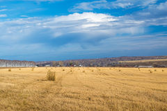 Landscape photo of rolled hay on a field Royalty Free Stock Images