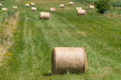 Landscape photo of rolled hay on a field Stock Photography