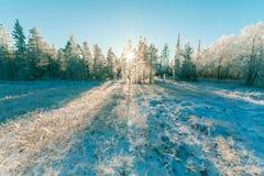 Landscape Photo of Sun Raise Through Green Leaf Trees Royalty Free Stock Photo