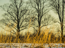 Landscape. Photo taken near me, the trees stand out under the sky of a beautiful color Royalty Free Stock Photos