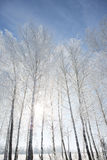 Landscape photo of a trees covered in fresh snow Royalty Free Stock Images