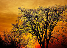 Landscape photo of trees in sunset in deep autumn Stock Photography