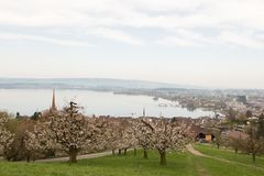 Landscape photograph of small city Zug near lake in morning in Switzerland. Aerial image of Zug city. Cheery trees with flowers. Landscape photograph of small Royalty Free Stock Photo