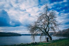 Landscape Photography of Bare Tree Near Body of Water Under Cloudy Skies Stock Photography