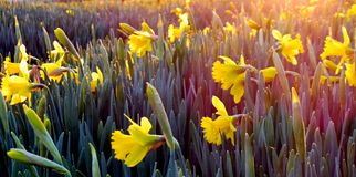 Landscape Photography of Field Covered With Yellow Flowers Stock Photos