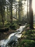 Landscape Photography of Forest Royalty Free Stock Images