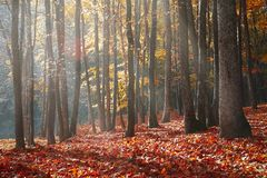 Landscape Photography of Forest during Autumn Season royalty free stock images