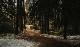 Landscape Photography of Forest Trees Stock Images