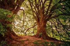 Landscape Photography of Green Leaf Trees royalty free stock photography