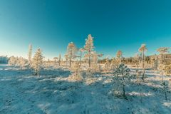 Landscape Photography of Snowy Forest Under Clear Sky Stock Photo