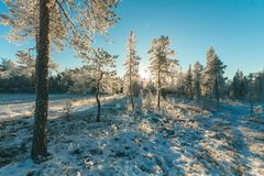 Landscape Photography of Trees Covered With Snow Stock Image
