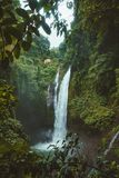 Landscape Photography of Waterfalls Surrounded by Green Leafed Plants Stock Images